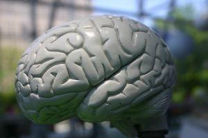 jak-działa-mozg